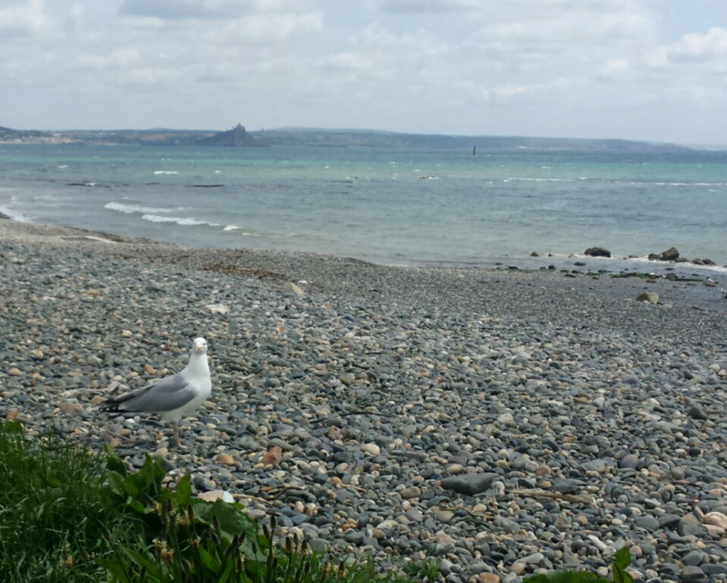 View at lunch over to St Michael's Mount. Gull eyeing up our sandwiches