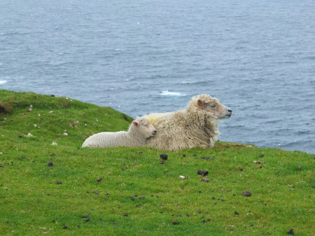 The sheep seemed to like looking out to sea