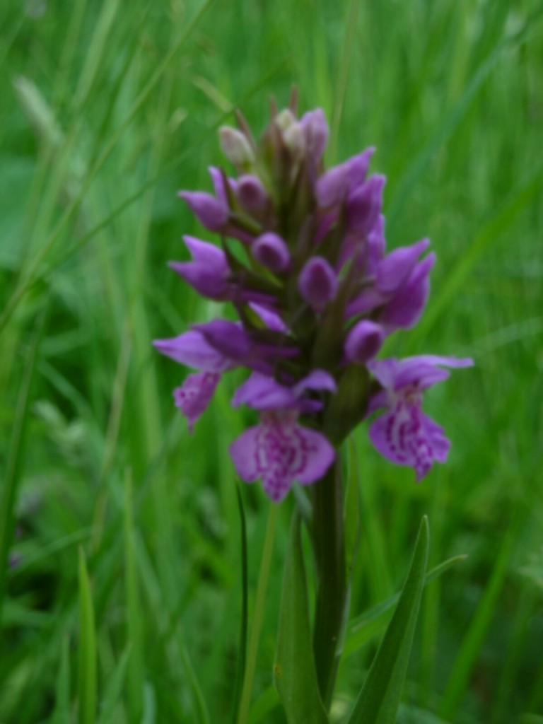 Orchid in the verge