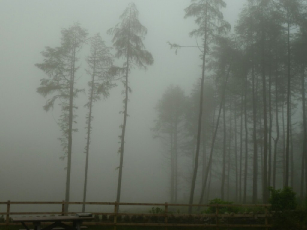 Misty trees at Brecraigs campsite