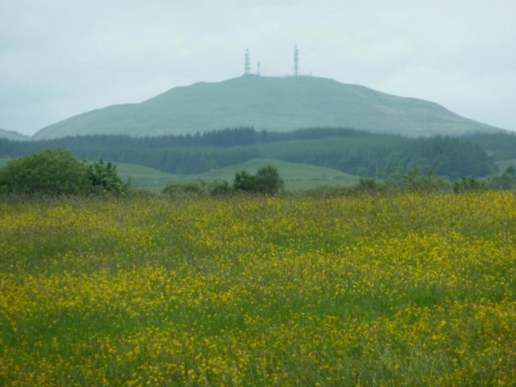 Hills South of Kinross